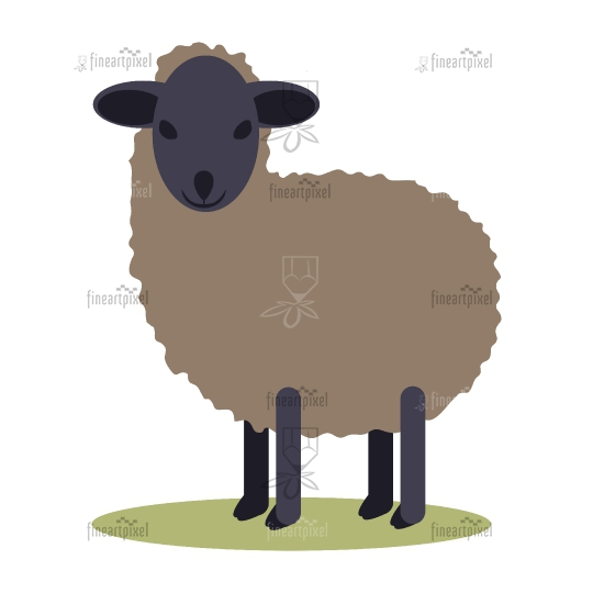Black small Sheep isolated.