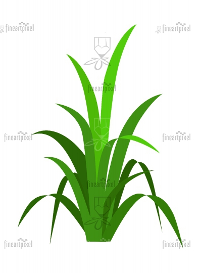 Bunch of grass isolated on white background