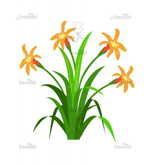 Grass with Orange flowers isolated on white background