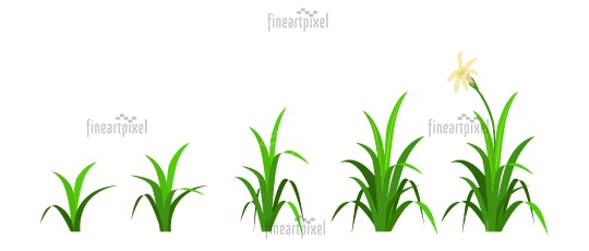 Growing plant illustration Stages of growing grass