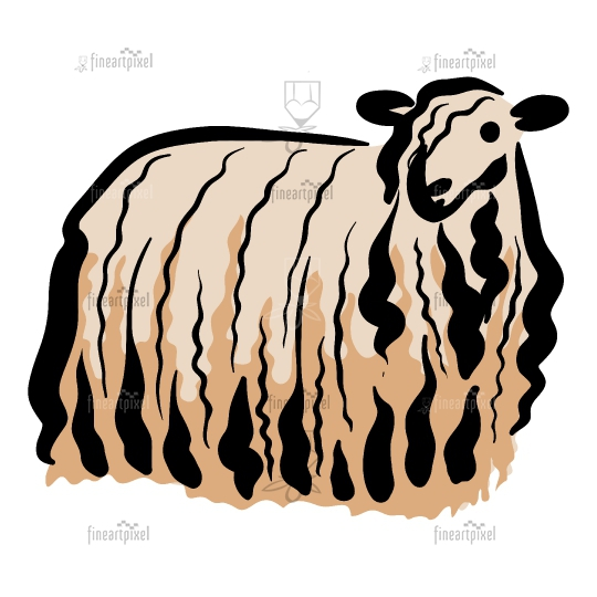 Sheep isolated in white background.