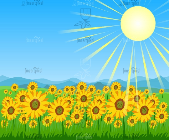Sunflower field mountains and bright sky with sun background