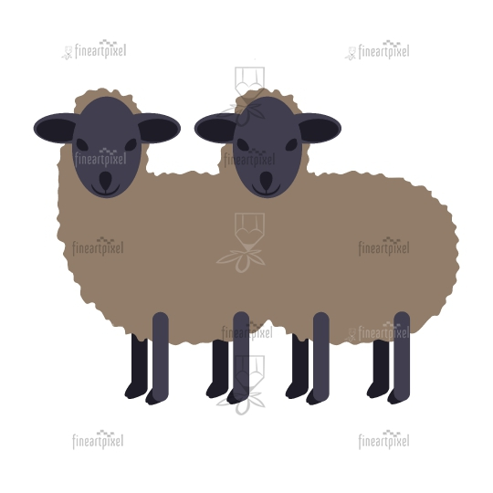Two black small sheep isolated.