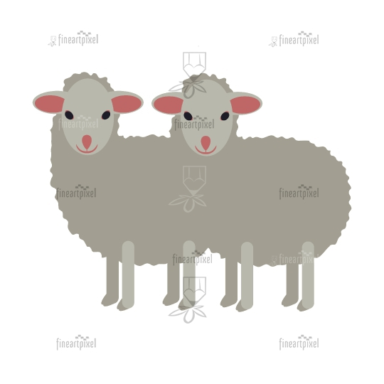 Two white small sheep isolated.